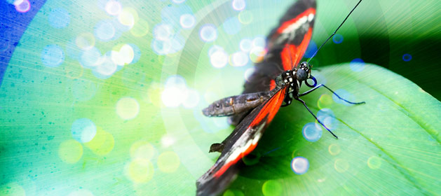 Magical Metamorphosis � Butterfly Life Cycle Stories