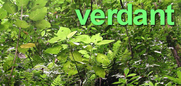 image of green jungle foliage to represent meaning of verdant