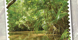 Design a Rainforest Postcard